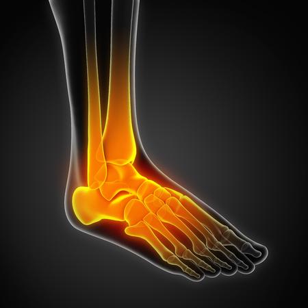 Human Foot Anatomy Illustration