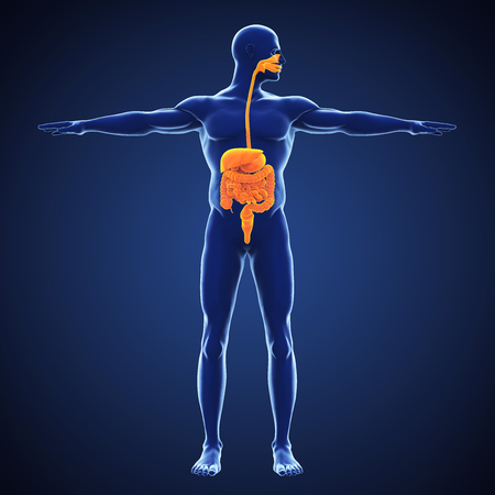 Human Digestive System Illustration Stockfoto - 115069914
