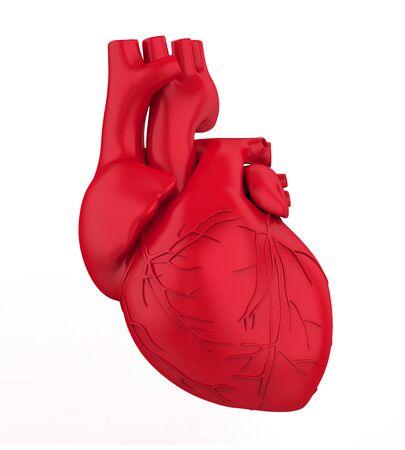 Human Heart Isolated Imagens