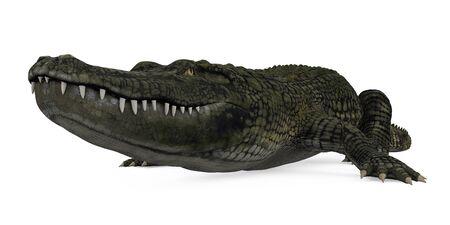 Crocodile Alligator Isolated