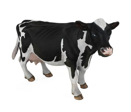 Cow Isolated Stockfoto