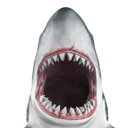 Great White Shark Open Mouth Isolated