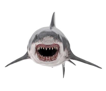 Great White Shark Isolated Stock fotó