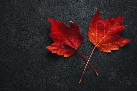 Maple red leaves on dark background. Top View. Autumn concept. Standard-Bild