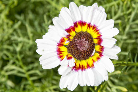 yellow blossom: Nice flower with white red yellow blossom with blurred background. Stock Photo