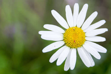 yellow blossom: Nice flower with white yellow blossom with blurred background. Stock Photo