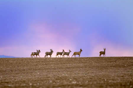 herd of deer: Herd of deer on the horizon with colored sky