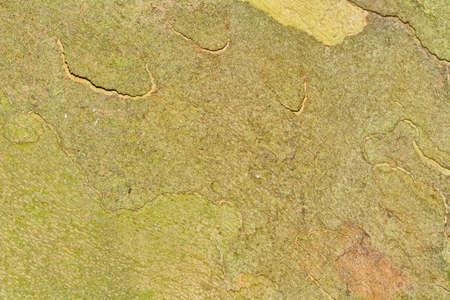 green brown: Nice detailed macro of green brown tree terk.