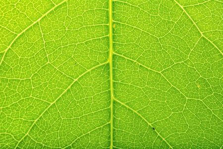 detailed view: Detailed view of green leaves background Stock Photo
