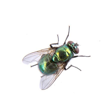 mosca: Mosca verde aislado en un fondo negro Foto de archivo