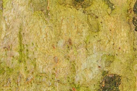 green brown: Nice detailed macro brown green tree terk Stock Photo