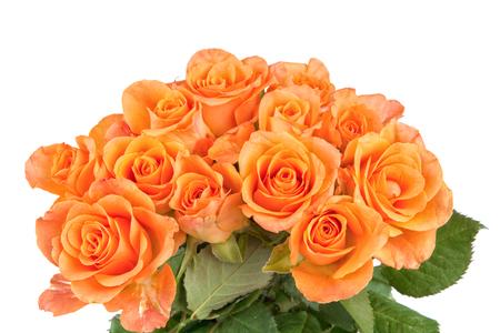 rosas naranjas: rosas de color naranja aislada sobre un fondo blanco