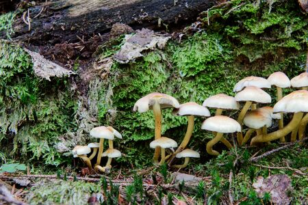 Group of wild mushrooms growing in a forest