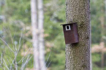 Bird booth hung on a tree. Spring home for nesting birds 스톡 콘텐츠