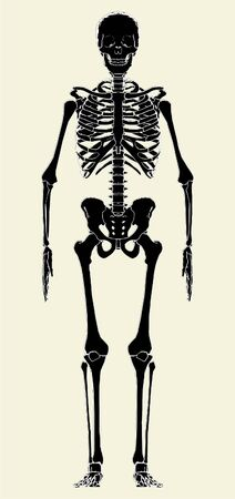 ghost rock: Human Skeleton Vector