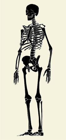 Human Skeleton Vector Vector