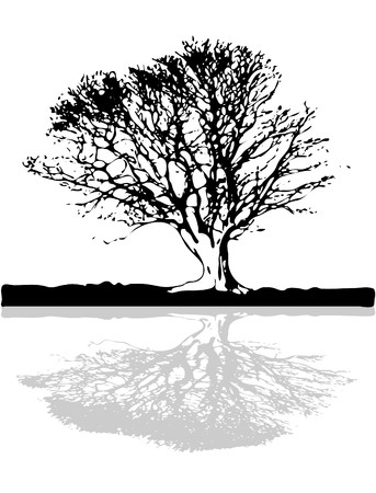 Old Tree With Large Trunk Above The Ground Lake Illustration