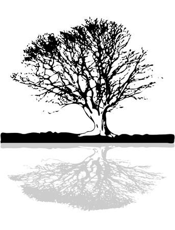 racines: Vieil arbre avec grand coffre surplombant le lac de sol Illustration