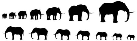 art: Seven Elefants In Line Silhouette