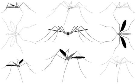 Mosquito Stock Vector - 15983901