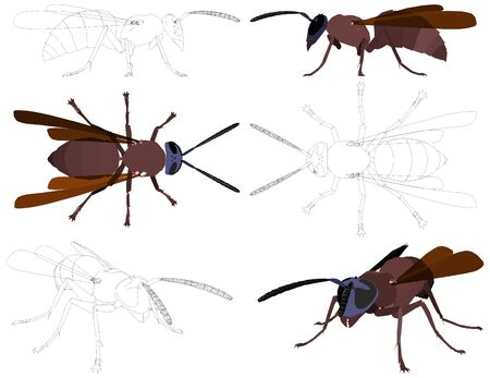 Wasp Stock Vector - 15983902