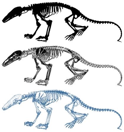 Dinosaur Skeleton Isolated On White Background Vector Illustration