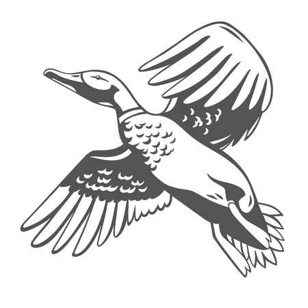 Eend. Vectorillustratie geïsoleerd op wit. Stock Illustratie