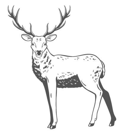 Ilustración del vector de ciervos en el fondo blanco. Foto de archivo - 85131364