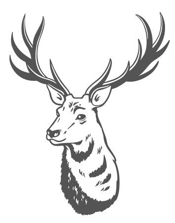 Vectorillustratie van een hert op witte achtergrond.