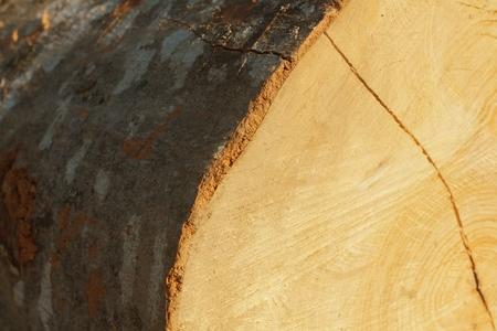 wooden texture Stok Fotoğraf - 110544379