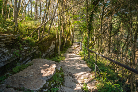 Popular mountain tourist route in Yew-Boxwood Grove in Caucasian biosphere reserve, Khosta district of Sochi, Russia.