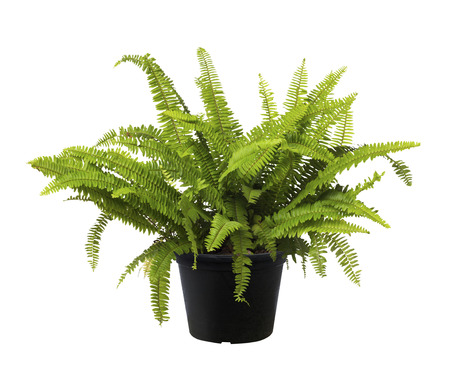 Fern, Green leaf tree plant fresh nature, white background Stok Fotoğraf
