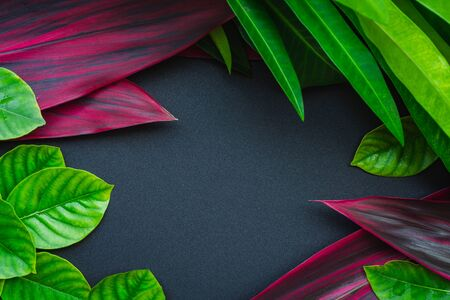 Fresh green and red leaf background with gray space for text