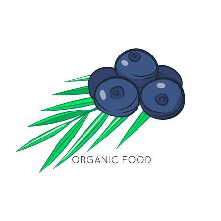 Acai berries vector illustration. Organic food. Cartoon style Illustration