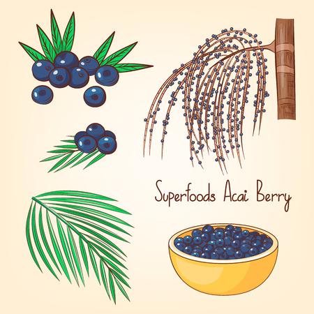 Acai berries set with tree and leaves. Superfoods collection. Hand drawn vector illustration. Cartoon style.