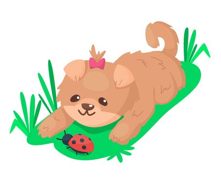 Cute puppy playing with ladybug on the grass. Pretty fluffy brown dog. Vector cartoon illustration for kids.