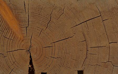 smooth wood: Wooden Floor