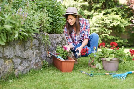 Cute Caucasian brunette with hat on head and in working clothes crouchig and pruning flowers while crouching in backyard.