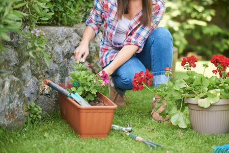 Caucasian woman in working clothes planting flowers in her backyard.