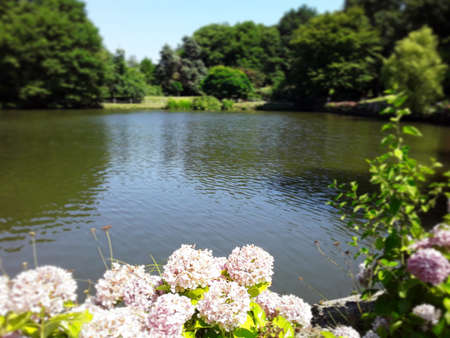 View of a lake among hydrangeas and trees in Ataturk Arboretum.