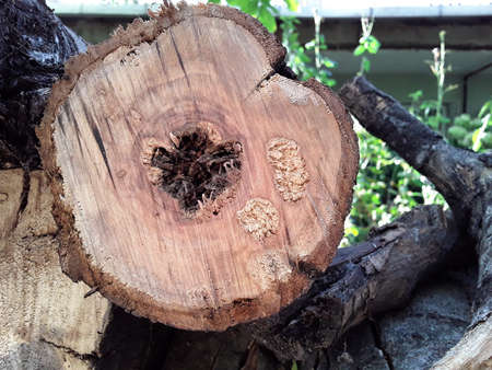A close-up view of a rotten tree.