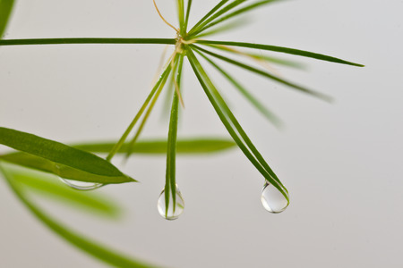 etude: The drops on the leaves of trees after the rain Stock Photo
