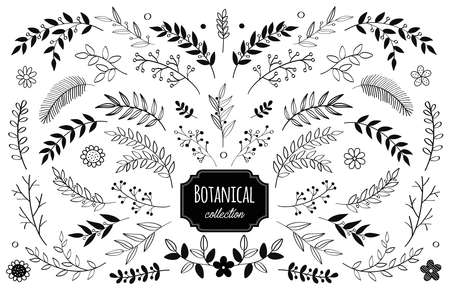 vector floral elements. Branches and leaves. Herbs and plants collection. Vintage botanical illustrations and floral wreaths.