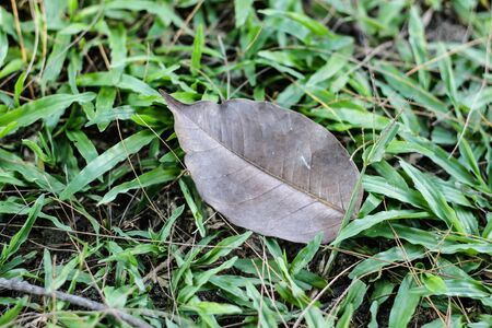 sward: leaf and  lawn