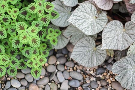 ornamental plants and rock Stock Photo