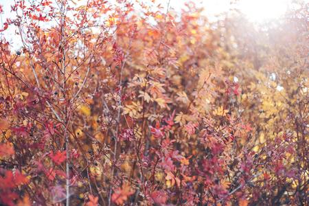 Country landscape. Kazakhstan. Trees along the road. Golden autumn. Indian summer. Autumn landscape. Forest. Blue sky and white clouds. Country road. Bright autumn landscape Reklamní fotografie
