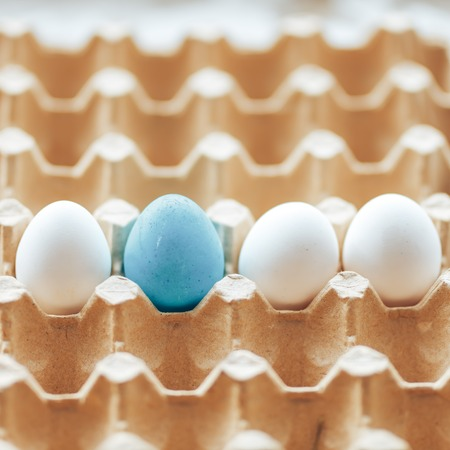 A box of line white chicken eggs with one painted blue eggs a cardboard tray with raw chicken eggs, preparation for Easter sof focus Imagens
