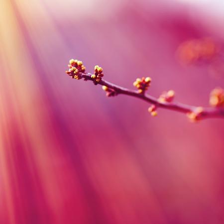 Farbe des Jahres 2018: Ultraviolett. Abstrakte tiefrosa Pastellfarbe, basierend auf Gras.