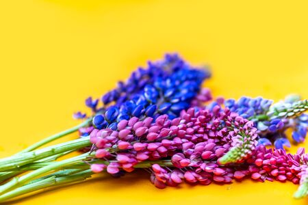 colorful lupine on yellow background, space for text, top view flatlay.