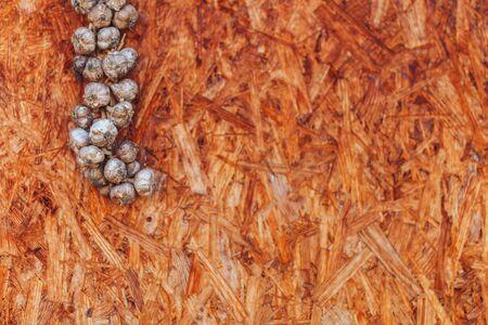 garlic pigtail on wooden background hanging in corner.